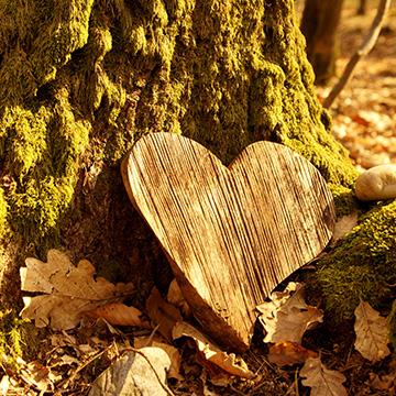 Herz aus Holz im Wald © ImagESine (333505249) - stock.adobe.com